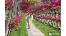 吉林市金珠花海景区