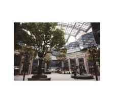 上海工艺树价格